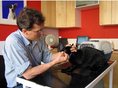 在澳洲如何成為一名獸醫師