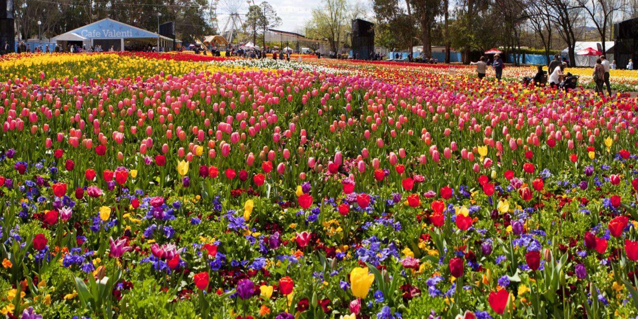 春天來臨 Canberra Floriade 坎培拉花卉藝術節