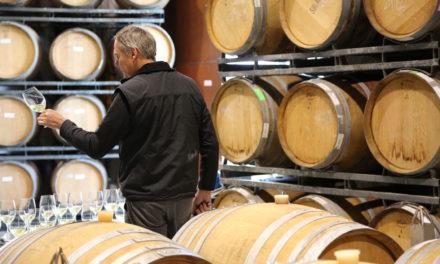 澳洲擁有200年歷史 獵人谷酒莊【Hunter Valley】