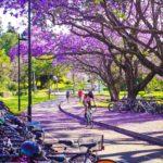 紫色的浪漫 藍花楹 – Brisbane Top 10