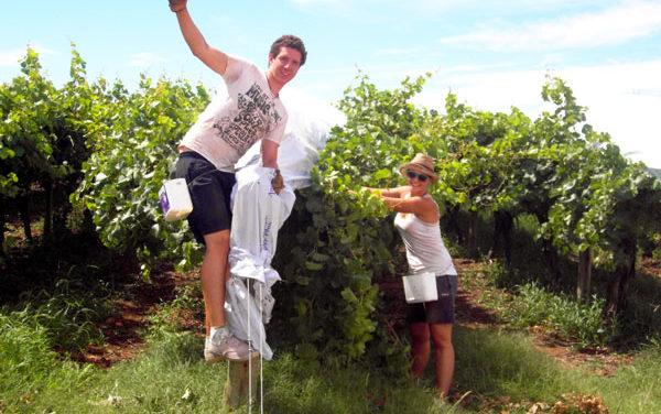 澳洲打工渡假 農場打工 利用收穫手冊指南找工作