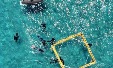 澳洲留學 SCU海洋科學教授帶領全球珊瑚礁復育