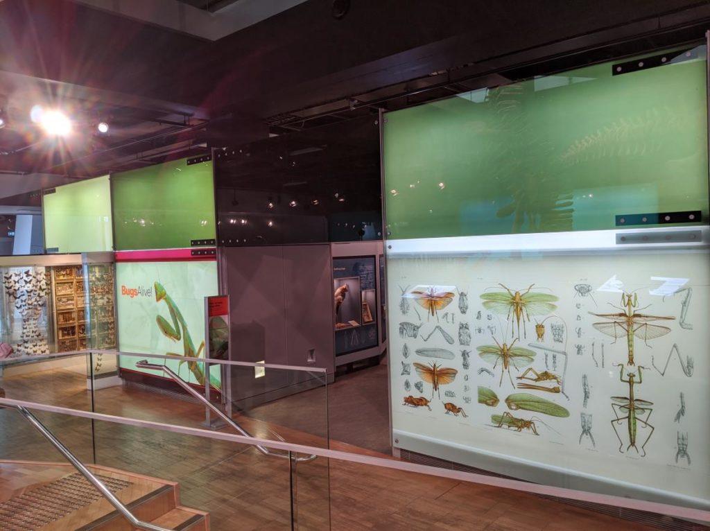 澳洲遊學 墨爾本大學附設語文中心 Melbourne Museum11