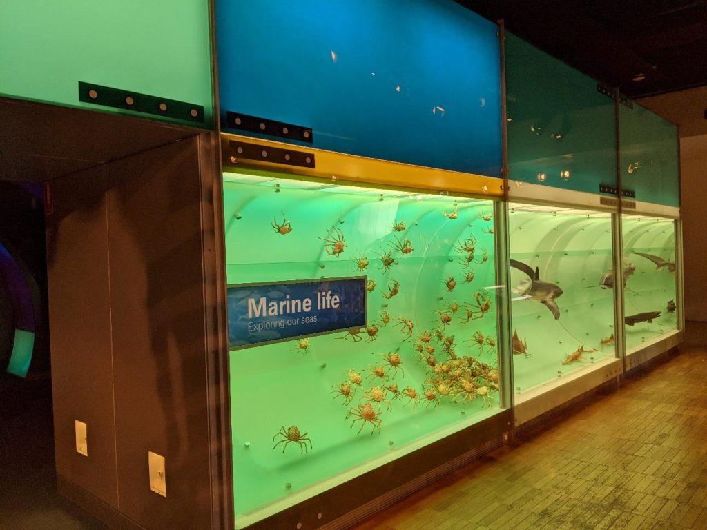 澳洲遊學 墨爾本大學附設語文中心 Melbourne Museum12