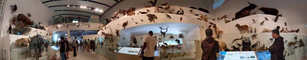 澳洲遊學 墨爾本大學附設語文中心 Melbourne Museum9
