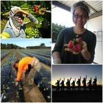 Australian farm job